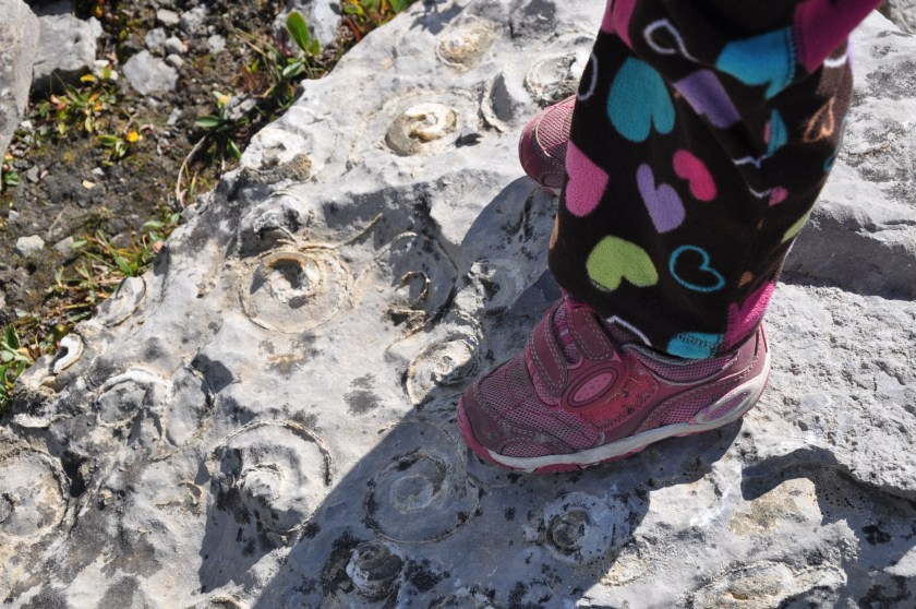 Finding fossils on the Wilcox Pass hiking trail in Jasper National Park, Canada