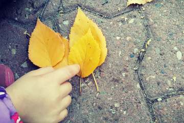 small hands pointing to yellow fallen leaves on a brick sidewalk... helping kids connect with nature in the city.