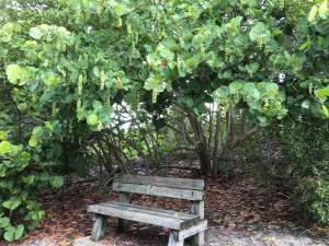 a wooden park bench sitting under trees