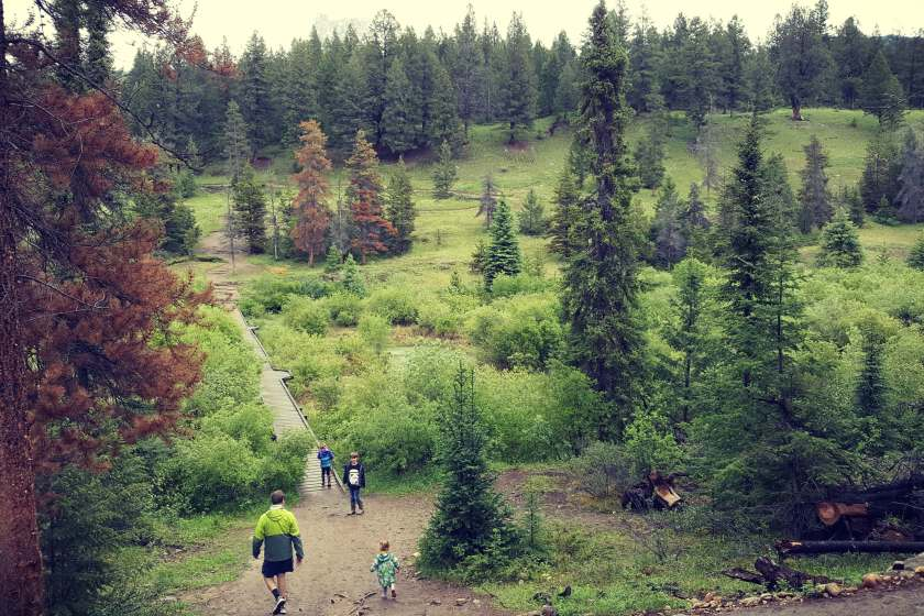 A dad and three kids approaching a boardwalk over a creek at Valley of the five lakes in Jasper