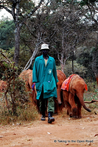 24 Hours in Nairobi elephant david sheldrick wildlife trust taking to the open road peggy tee