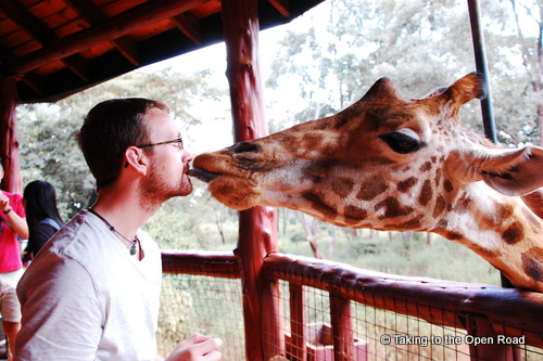 24 Hours in Nairobi kisses giraffe taking to the open road peggy tee