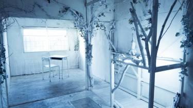 素の白い森