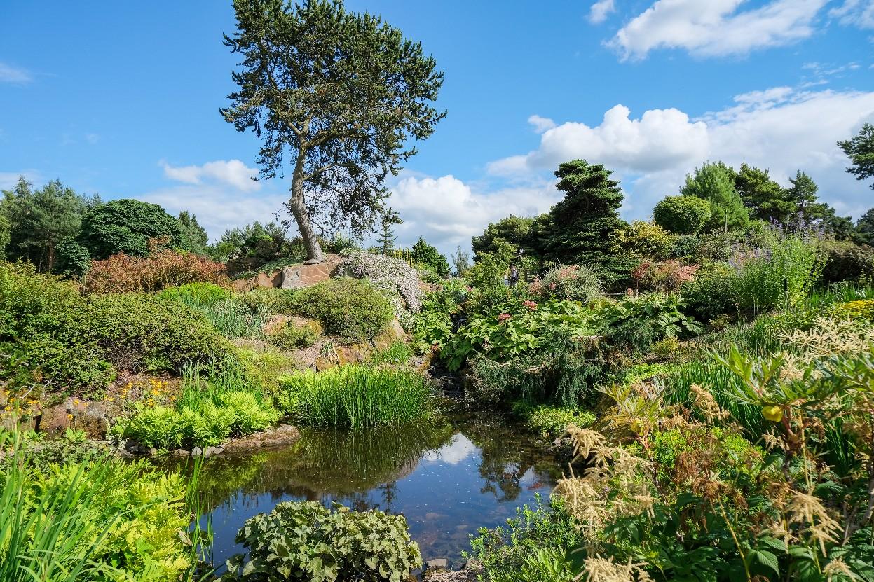 【オススメ観光スポット紹介】花が咲き乱れる夏の「エディンバラ王立植物園」