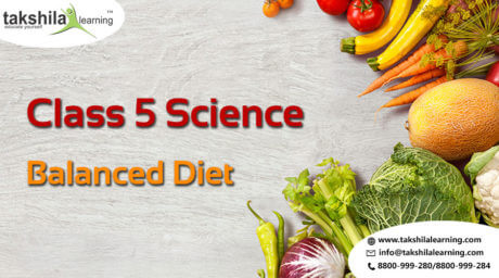 Class 5 Science Balanced Diet Proteins Nutrients Pyramid Of Food Chart