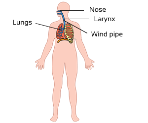 Class 3 Science-Organ Systems of Our Body-CBSE NCERT Solution for Class 3 respiratory-system