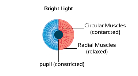 NCERT Solutions for Class 10 The Human Eye and The Colorful World