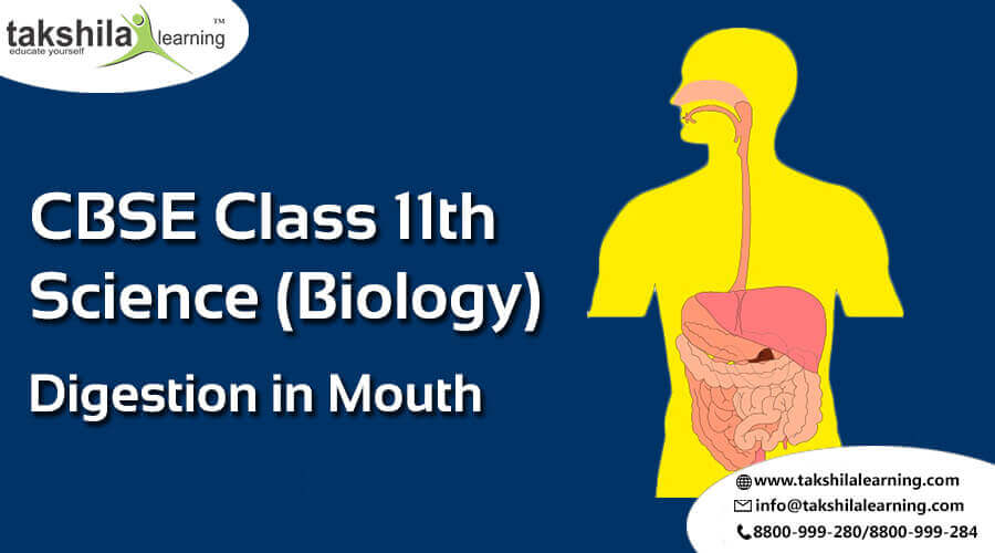 NCERT Solutions for Class 11 Science Biology Digestion in Mouth notes