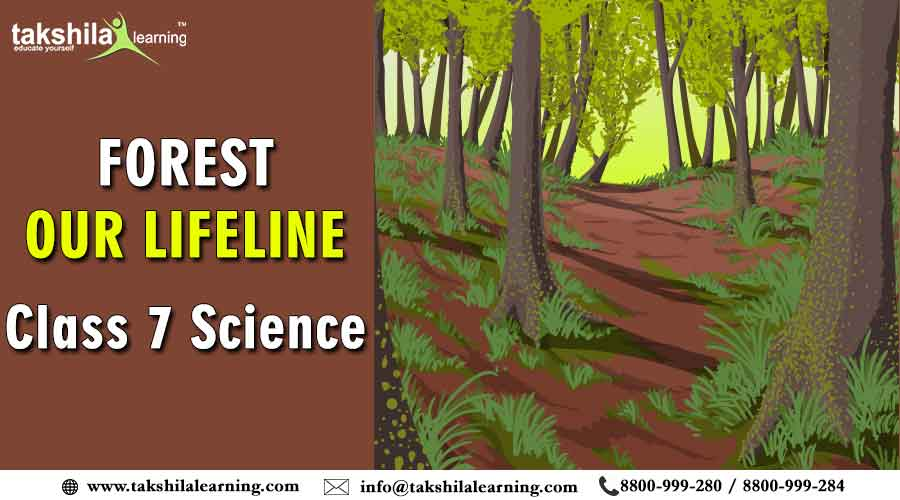 Class 7 Science - Importance of Forest - Our Lifeline