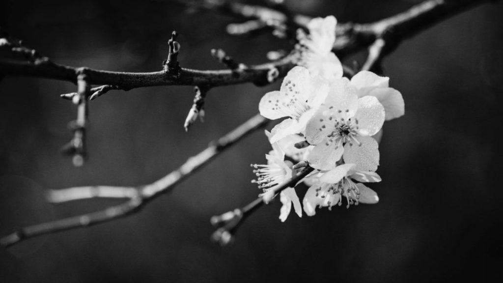 TAKUMI lifestyle | Sakura