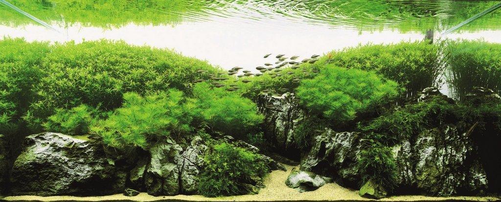 TAKUMI lifestyle   zen-aquarium4