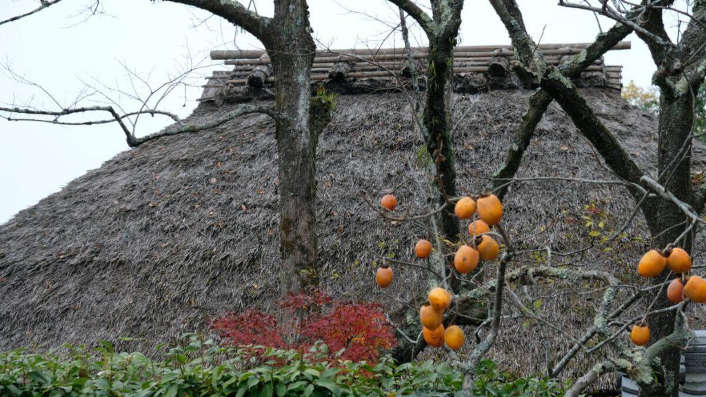TAKUMI lifestyle | La bellezza della poesia giapponese cover