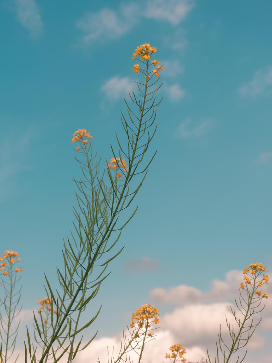 TAKUMI lifestyle - l'equilibrio armonico della natura © Le Chane