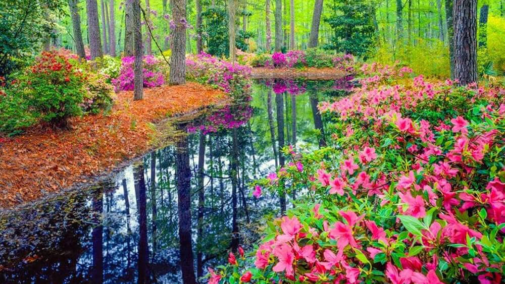 TAKUMI lifestyle - l'equilibrio armonico della natura 12
