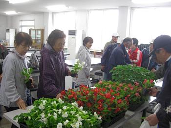 参加者に花壇用苗のプレゼントです!