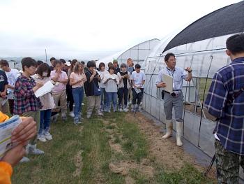 研修生のホウレンソウの栽培試験ハウス