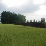 16 広い畑に堆肥が芳る