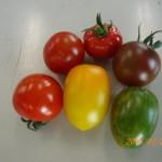 6種類のミニトマト