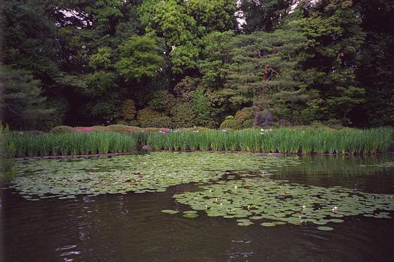 Heian Jingu Lily Pond