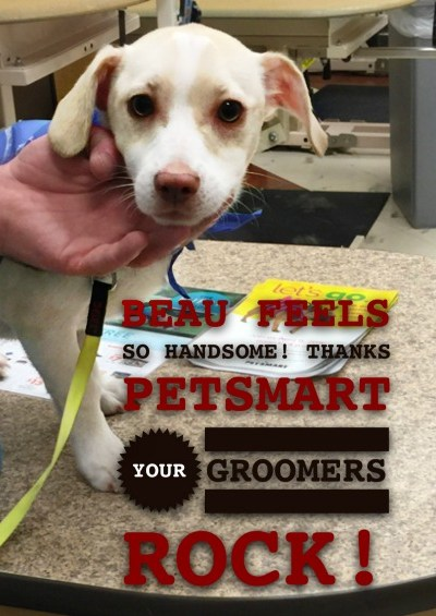 We took our dog to try #PetSmartGrooming