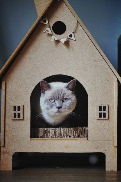 Superb Benefits Of Buying Cat Housing For Your Feline