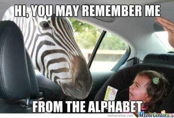 zebra_o_489502