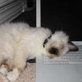 i-is-tired-wurk-too-hard.jpg
