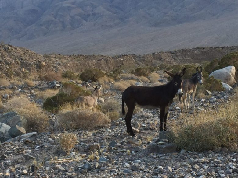 Goler Wash, Coyote Road, Death Valley, California, Mojave, Mojave Desert