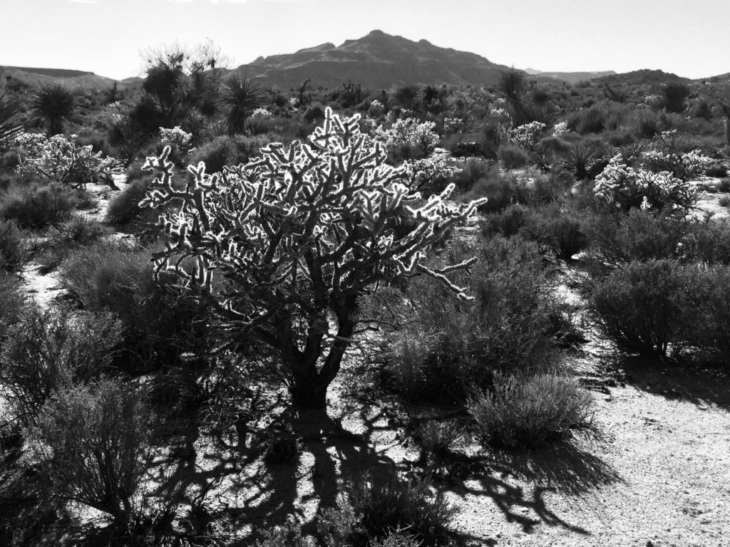 Mojave National Preserve, Mojave Desert, California