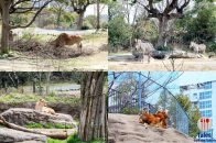 Tennoji Zoo Animals