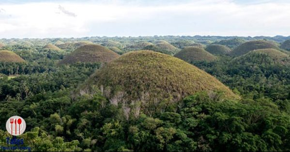 Visiting the Chocolate Hills and Tarsiers in Bohol