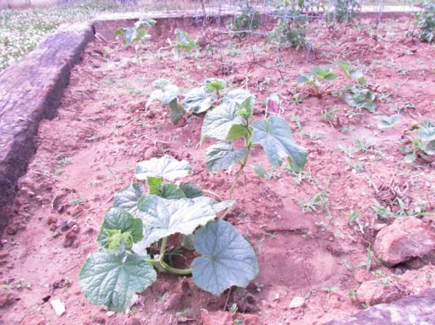 garden update 3 (12)
