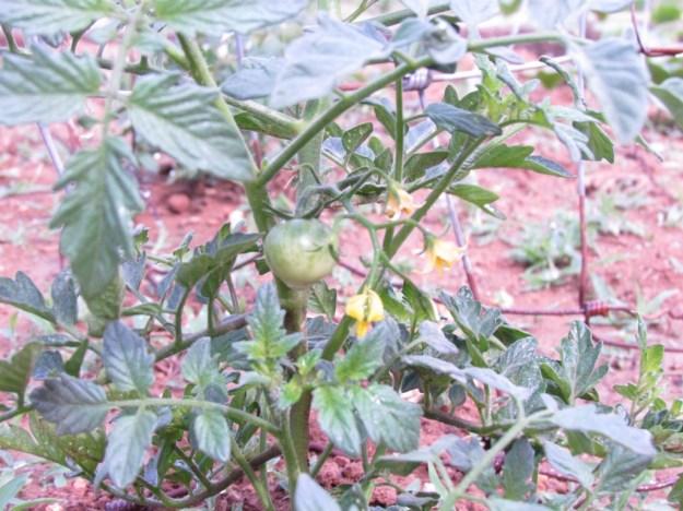 garden update 3 (13)