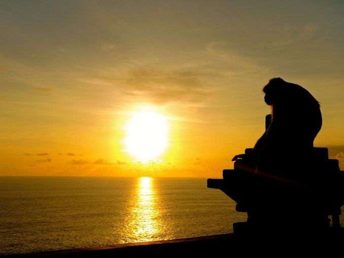 Bali Sunset view with a monkey from uluwatu