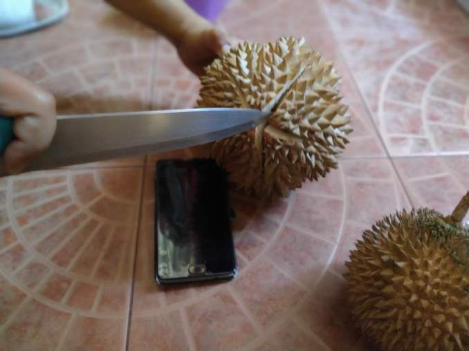 cutting durian