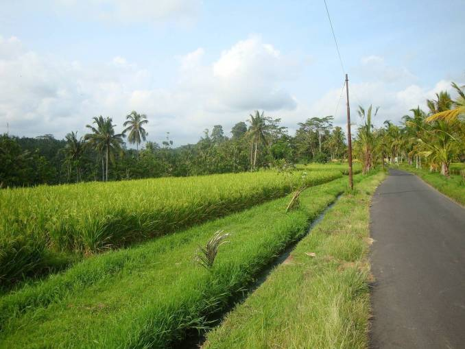 nearby bali gated community just green landscapes