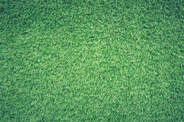 Green Burial Myths