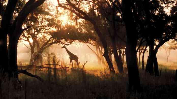 Kilimanjaro Safaris After Sunset
