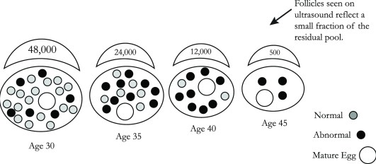 Figure 1-01-Egg Count Illust-PRINT