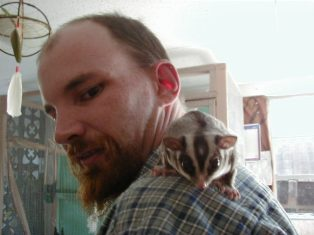 Volunteer with sugar glider