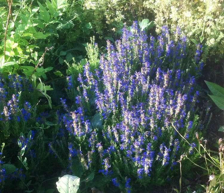 Vida Sana y Sustentable: Bee the Change - 10 Bee Friendly Companion plantas que disuaden las plagas