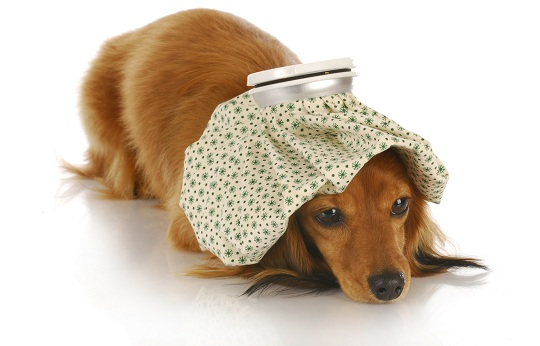 Image result for How to tell if your dog is sick