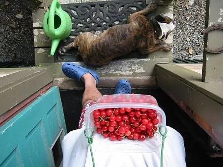 berry back porch still life
