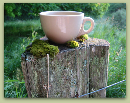 coffee cup found on a fence post