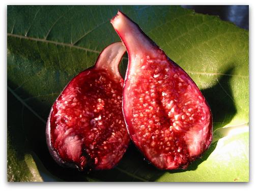 Negronne Fig or Violette du Bordeaux Fig