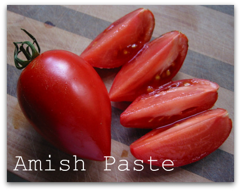 Amish Paste is the juiciest meatiest paste or Roma type tomato I've ever grown. It's a great fresh eating tomato and not as thick-skinned as most paste tomatoes.