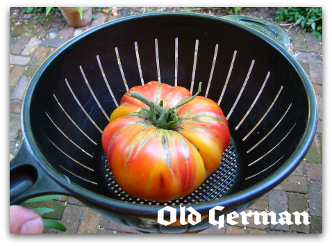 blog_Old_German_tomato