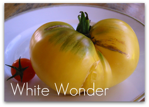blog_whitewonder_tomato