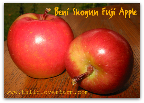Beni Shogun Fuji Apple