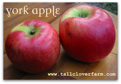 York Apple